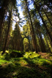 Magic fantasy forest Stock Images