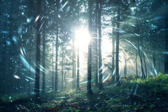 Magic fantasy light in the forest Stock Image