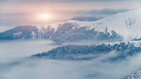 Magic fir trees covered by snow in mountains. Winter mountain hills and magic fir trees covered by snow with foggy and cloudy background, Carpathian, Ukraine Royalty Free Stock Photos