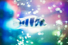 Magic fish Stock Images