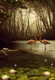 Magic Flamingos Stock Image