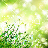 Magic Flower Meadow Royalty Free Stock Image