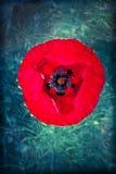 Magic flower - poppy Royalty Free Stock Photography