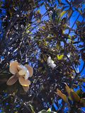 Magic flower on the tree stock image