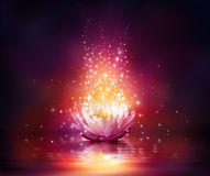 Magic flower on water. Red shining Stock Photo