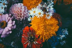 Magic flowers with dark leaves background. Stock Images