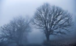 The magic of the fog Stock Photo