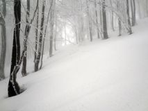 Winter fog forest in the mountain. Magic fog forest in the winter. Mountain Bieszczady, Poland. Winter scenery Stock Images