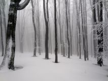 Winter fog forest in the mountain. Magic fog forest in the winter. Mountain Bieszczady, Poland. Winter scenery Stock Photos