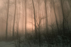 Magic foggy forest Royalty Free Stock Image