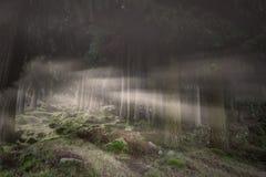 Magic foggy forest Stock Photo