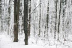 Magic foggy and frozen winter forest scene. Misty landscape back Stock Photo