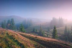 Magic foggy valley Royalty Free Stock Photos