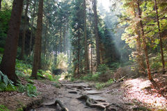 Magic forest Stock Images