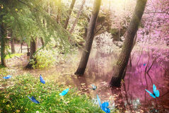 Magic forest Royalty Free Stock Images