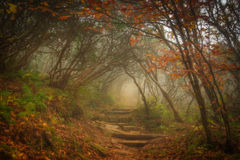 Magic Forest. The fog settled in on Craggy Garden Trail on an autumn day. All the colors combined with the misty evening gives this scene an eery yet magical
