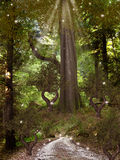 Magic Forest. With trees dragonfly and path royalty free illustration