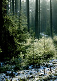 Magic Forest Royalty Free Stock Photos