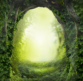 Magic forest. Beautiful fantasy magic forest background Royalty Free Stock Images