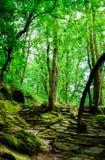 Magic Forest of Brocéliande, France stock photo