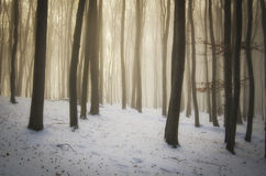 Magic forest on Christmas morning with fog Stock Images