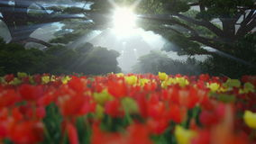 Magic forest with colorful tulips, sun shinning through trees. Fly over stock footage