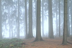 Magic forest. Covered with fog as in faerytale Stock Photo