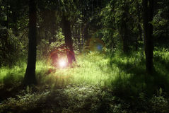 Magic Forest. Deep forest with lush green plants enlighten by mysterious light and flares Stock Image