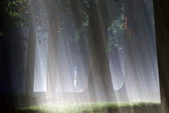 Magic Forest 2 Royalty Free Stock Photo