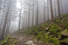 Magic forest fall with mist. Mystery forest with trees in fall and rocks Royalty Free Stock Images