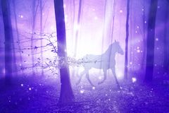 Magic forest with horse. Magic purple foggy light in the forest with horse. Abstract unicorn in the fairy woodland. Double exposure technique used Royalty Free Stock Image