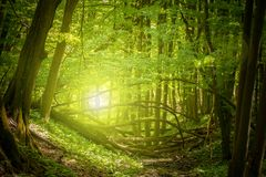 Free Magic Forest Light Royalty Free Stock Images - 115533239