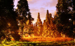 Magic Forest. Magical fantasy forest environment with majestic clouds and trees Stock Photography