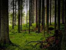 Magic Forest. Magical forest view shot in Finland Stock Photos