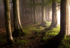 Magic forest Stock Photos