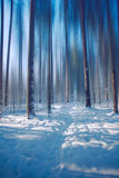 Magic forest. Nature winter landscape snow trees art cold sunset awesome colorful blur magic royalty free stock photo