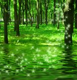 Magic Forest Near The River Royalty Free Stock Photography