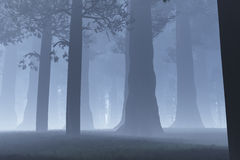 Magic Forest night. Magic Deep Forest 3D artwork Royalty Free Stock Images