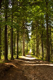 Magic forest path Stock Photos