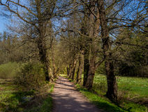 Magic forest path Royalty Free Stock Photos