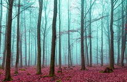 Magic forest in red and turquoise Royalty Free Stock Image