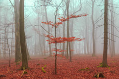 Magic forest in red and turquoise Royalty Free Stock Photo