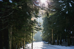 The magic forest. The magic snow landscape in Montenegro royalty free stock photos
