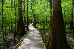 Magic Forest. Spring comes to life at the Congaree National Forest boardwalk near Columbia, South Carolina Stock Photo