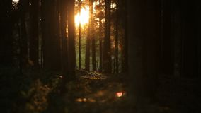 Lovely sunrise in romantic magic summer forest stock footage