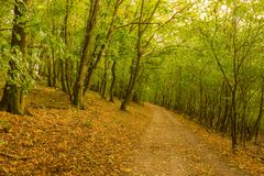Magic forest with sun rays. Path in the forest, trees, grass and bushes. Magical colors. Royalty Free Stock Photos