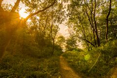 Magic forest with sun rays. Path in the forest, trees, grass and bushes. Magical colors. Stock Photos