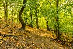 Magic forest with sun rays. Path in the forest, trees, grass and bushes. Magical colors. Stock Images