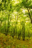 Magic forest with sun rays. Path in the forest, trees, grass and bushes. Magical colors. Royalty Free Stock Photo