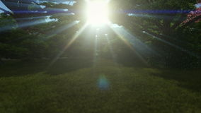 Magic forest, sun shinning through trees stock footage